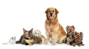 Grupo de animales domésticos en el fondo blanco Imágenes de archivo libres de regalías