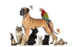 Grupo de animales domésticos - perro, gato, pájaro, reptil, conejo Imagen de archivo libre de regalías