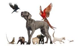 Grupo de animales domésticos - perro, gato, pájaro, reptil, conejo