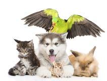 Grupo de animales domésticos que mienten en frente Aislado en el fondo blanco Imágenes de archivo libres de regalías