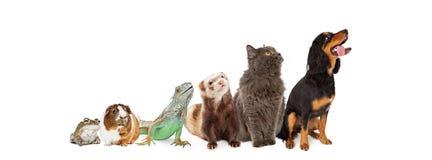 Grupo de animales domésticos que miran para arriba y de bandera lateral foto de archivo
