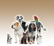 Grupo de animales domésticos que colocan el fondo del marrón del agaisnt Foto de archivo libre de regalías