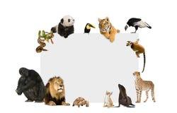 Grupo de animales salvajes alrededor de un cartel en blanco Imágenes de archivo libres de regalías