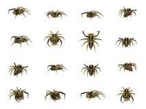 Grupo de aranha de salto isolado no fundo branco Foto de Stock