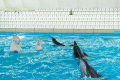 Grupo de aros de la torsión de los delfínes fotos de archivo
