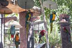 Grupo de assento dos papagaios Fotos de Stock
