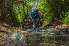 Grupo de backpackers que vadean la corriente en el bosque Imagen de archivo