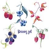 Grupo de bagas Rosehips e cerejas das groselhas das framboesas das morangos das amoras-pretas dos mirtilos ilustração do vetor