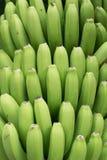 Grupo de bananas amarelas Agricultura tradicional em Barlovento ( Imagens de Stock