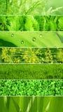 Grupo de bandeiras com textura verde da folha Fotos de Stock Royalty Free
