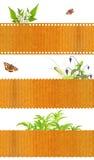 Grupo de bandeiras da natureza Imagem de Stock Royalty Free