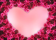 Grupo de bastidor de la flor de Rose Imagen de archivo