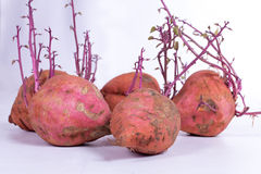 Grupo de batata doce em um fundo branco Imagens de Stock