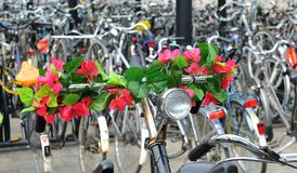 Grupo de bicicletas Fotos de archivo