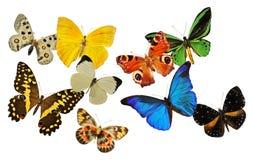 Grupo de borboleta Foto de Stock Royalty Free
