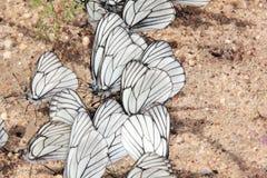 Grupo de borboletas. Fotografia de Stock