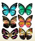 Grupo de borboletas coloridas do vetor Foto de Stock