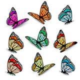 Grupo de borboletas coloridas realísticas. Fotos de Stock