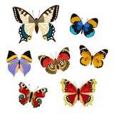 Grupo de borboletas coloridas realísticas Imagens de Stock