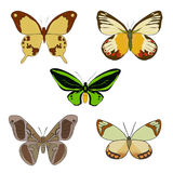 Grupo de borboletas coloridas tiradas mão da garatuja Imagem de Stock