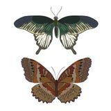 Grupo de borboletas coloridas tiradas mão da garatuja Foto de Stock