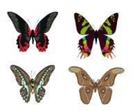 Grupo de borboletas coloridas tiradas mão da garatuja Imagem de Stock Royalty Free