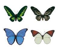 Grupo de borboletas coloridas tiradas mão da garatuja Fotos de Stock
