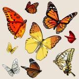 Grupo de borboletas diferentes em voo Fotografia de Stock Royalty Free