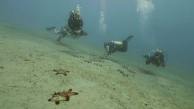 Grupo de buceadores que nadan bajo la agua de mar y seastars de observación en parte inferior almacen de metraje de vídeo