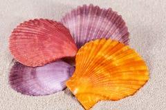 Grupo de cáscaras coloridas del mar del molusco en la arena, cierre para arriba Foto de archivo libre de regalías
