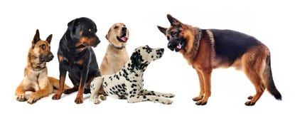 Grupo de cães foto de stock