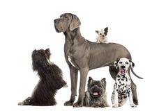 Grupo de cães Fotos de Stock