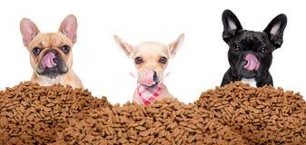 Grupo de cães atrás do alimento do monte imagens de stock royalty free