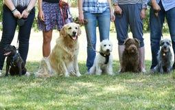 Grupo de cães com os proprietários na classe da obediência imagens de stock royalty free