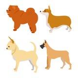 Grupo de cães do puro-sangue Fotos de Stock