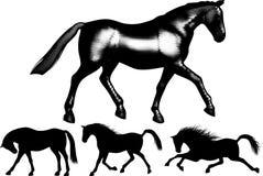 Grupo de caballos. ilustración del vector