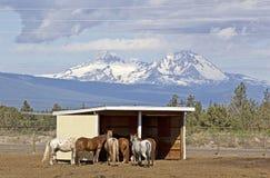 Grupo de caballos con las montañas de la cascada en fondo fotografía de archivo libre de regalías
