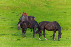 Grupo de caballos en campo verde Fotos de archivo