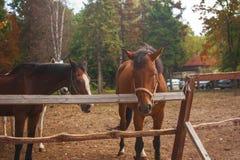 Grupo de caballos jovenes en el pasto Fotografía de archivo libre de regalías