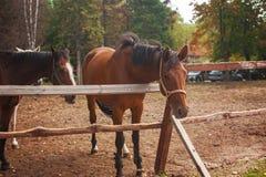 Grupo de caballos jovenes en el pasto Fotos de archivo libres de regalías