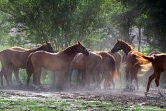 Grupo de caballos que beben de un canal del agua en el rancho rural Imagen de archivo libre de regalías