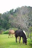 Grupo de caballos que comen la hierba en granja verde Imagen de archivo libre de regalías