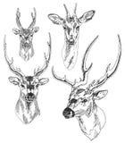 Grupo de cabeças tiradas mão dos cervos ilustração royalty free