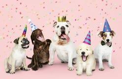 Grupo de cachorrinhos que comemoram um ano novo fotografia de stock royalty free