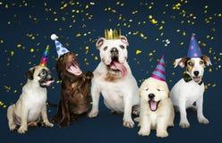 Grupo de cachorrinhos que comemoram um ano novo fotos de stock royalty free