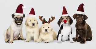 Grupo de cachorrinhos que vestem chapéus do Natal para comemorar o Natal fotos de stock