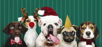 Grupo de cachorrinhos que vestem trajes do Natal imagem de stock