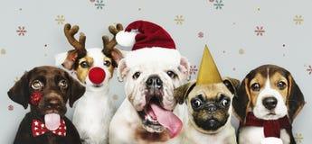 Grupo de cachorrinhos que vestem trajes do Natal fotos de stock
