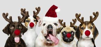 Grupo de cachorrinhos que vestem trajes do Natal para comemorar o Natal fotos de stock