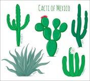 Grupo de cactos do mexicano do vetor Imagens de Stock